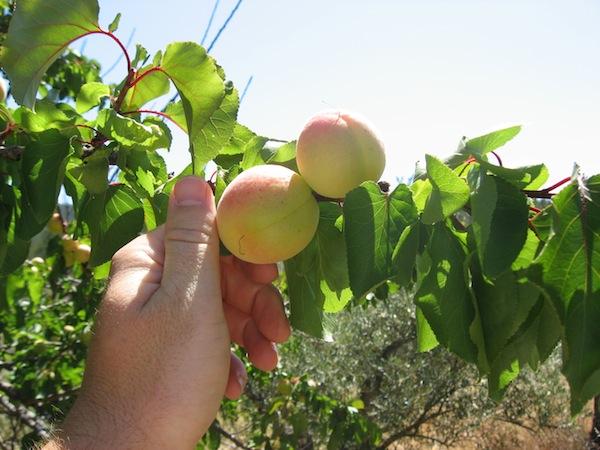 Coltivazione Biodinamica