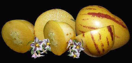 Frutto Pepino dulce storia