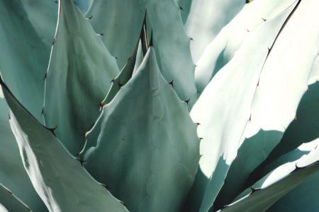 Tisana di Aloe vera
